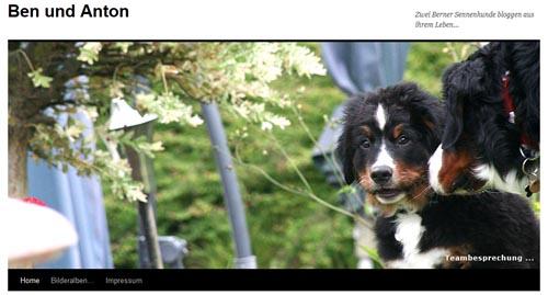 Ben und Anton - Zwei Berner Sennenhunde bloggen aus ihrem Leben