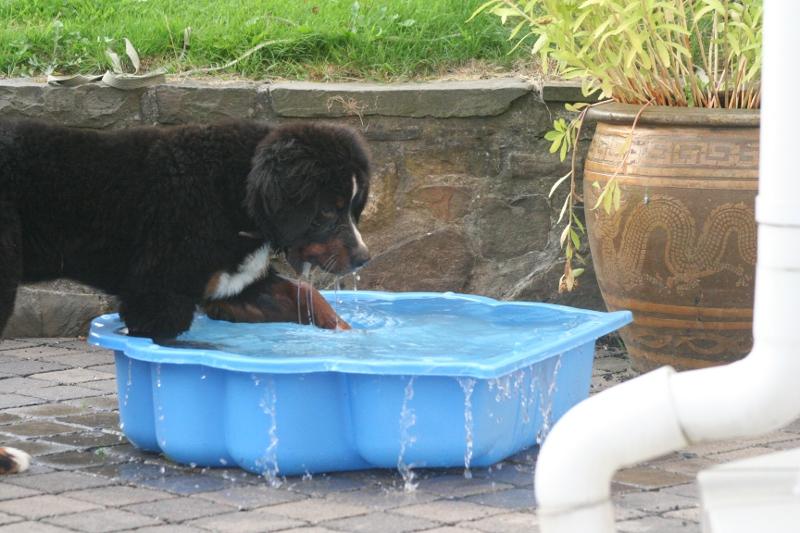 Yippi ...ein Pool